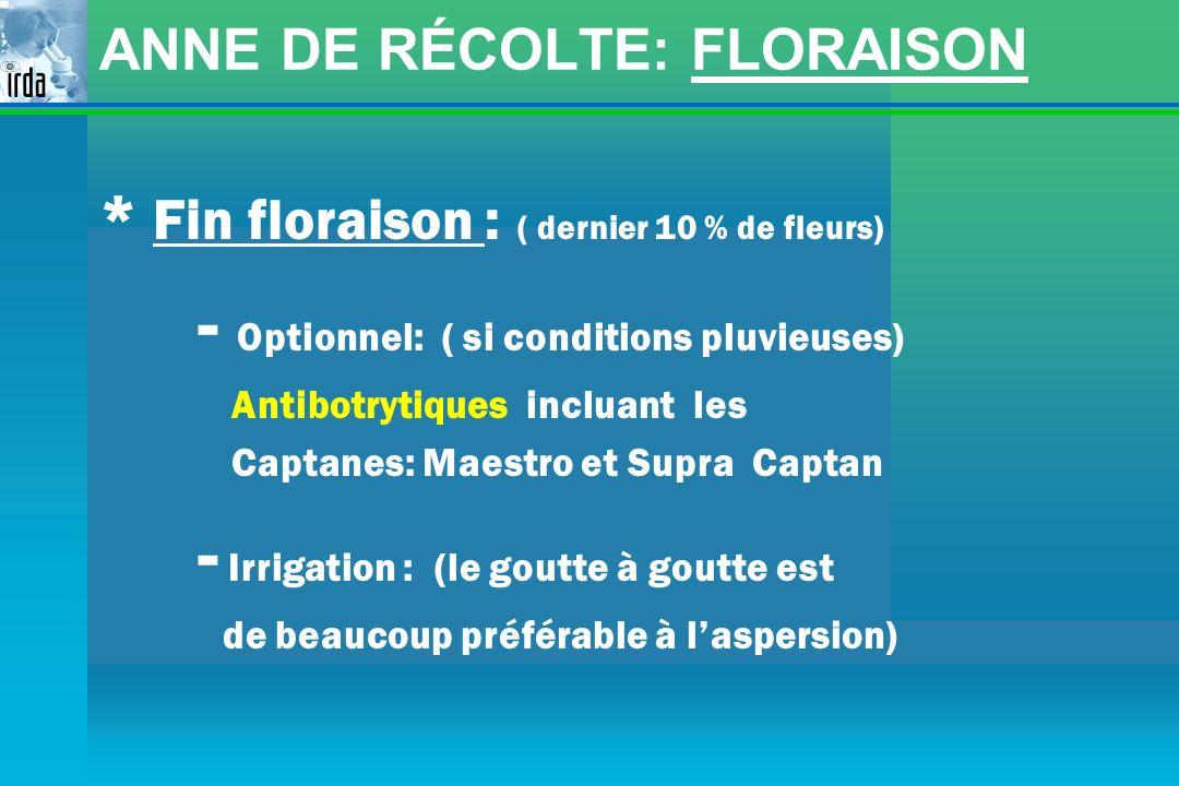 ANNE DE RÉCOLTE: FLORAISON