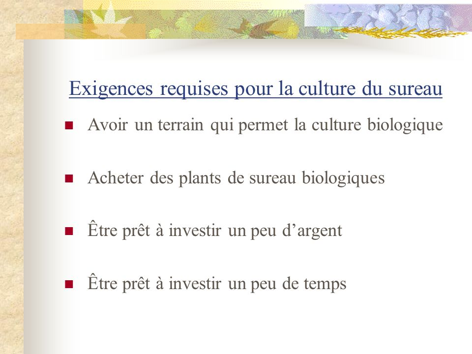 Exigences requises pour la culture du sureau