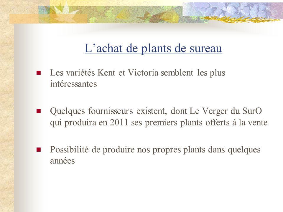 L'achat de plants de sureau