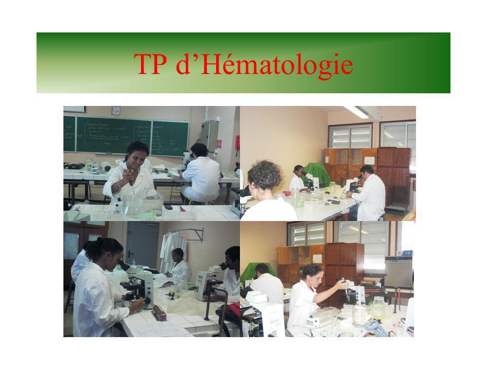 TP d'Hématologie