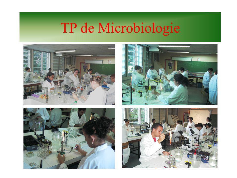 TP de Microbiologie