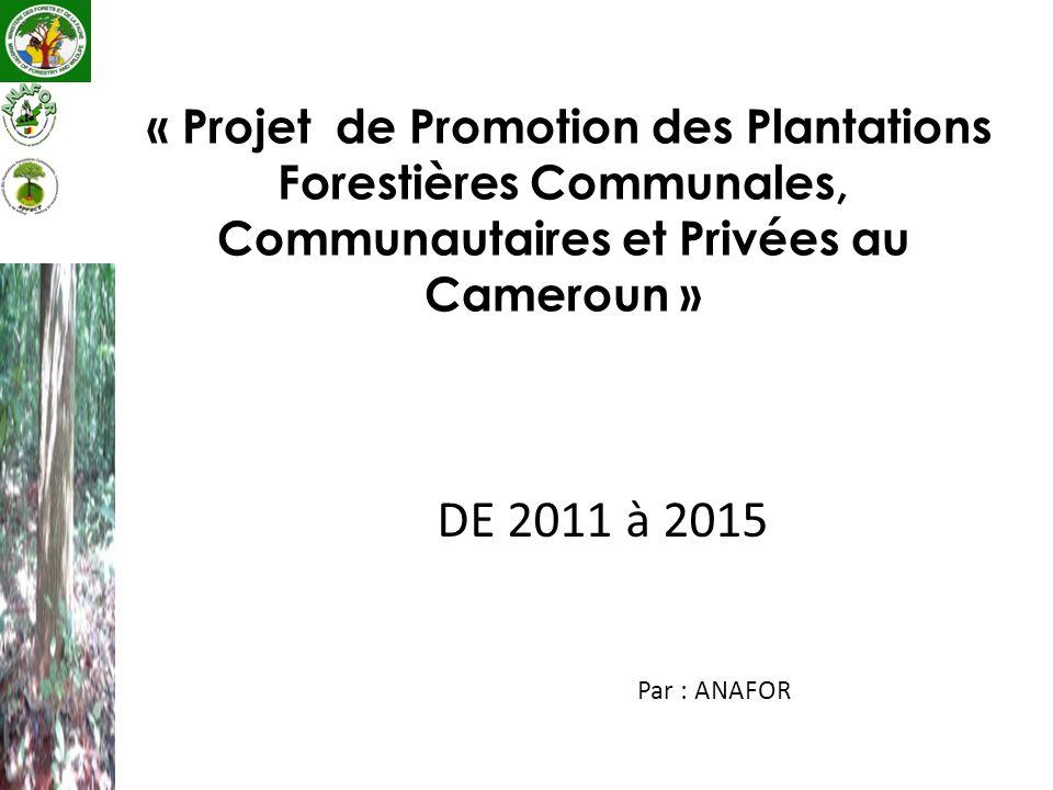 « Projet de Promotion des Plantations Forestières Communales, Communautaires et Privées au Cameroun »
