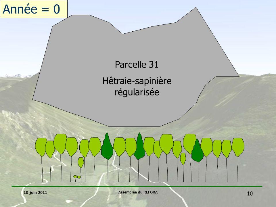 Hêtraie-sapinière régularisée