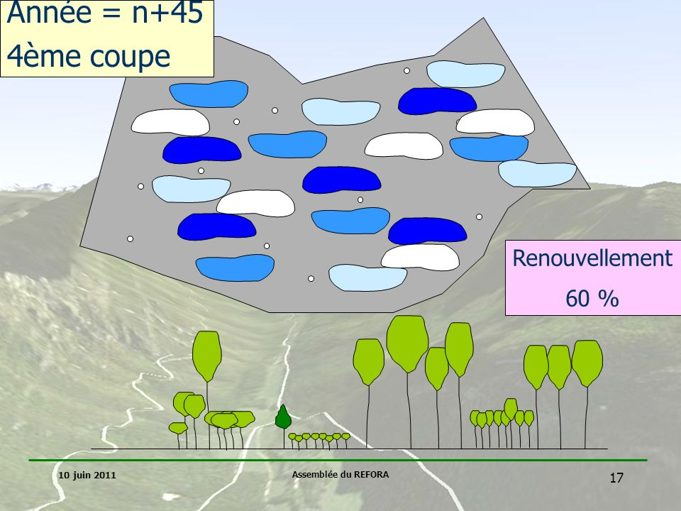 Année = n+45 4ème coupe Renouvellement 60 % 10 juin 2011