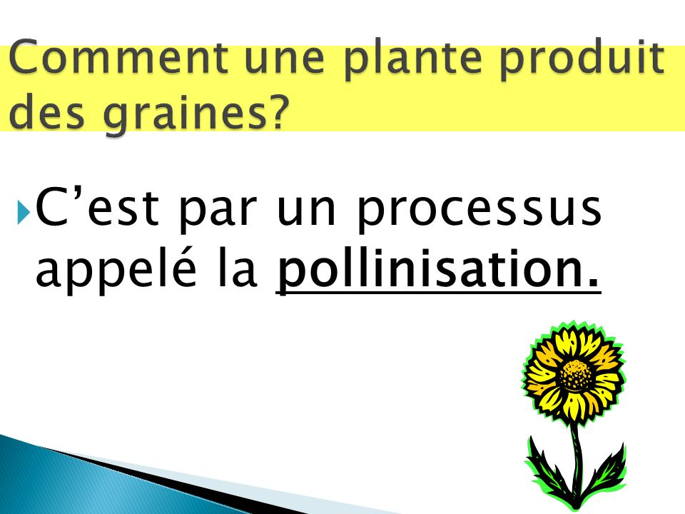 Comment une plante produit des graines