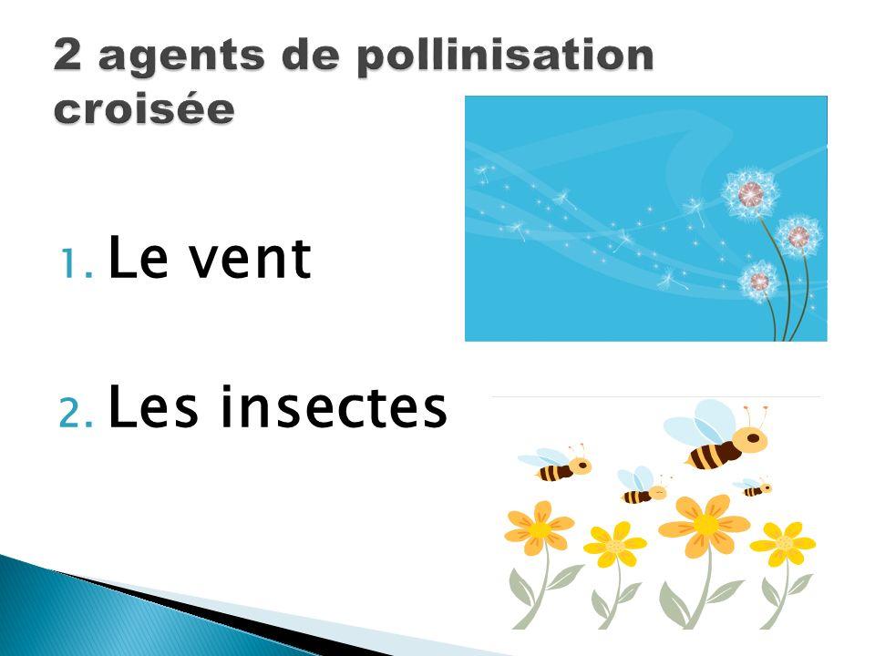 2 agents de pollinisation croisée