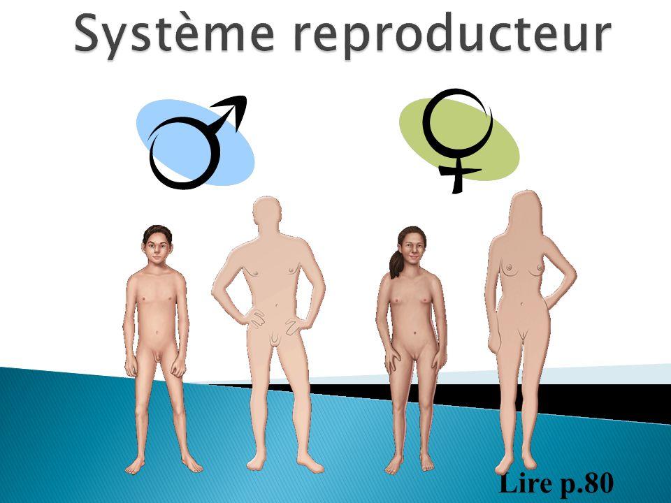 Système reproducteur Lire p.80