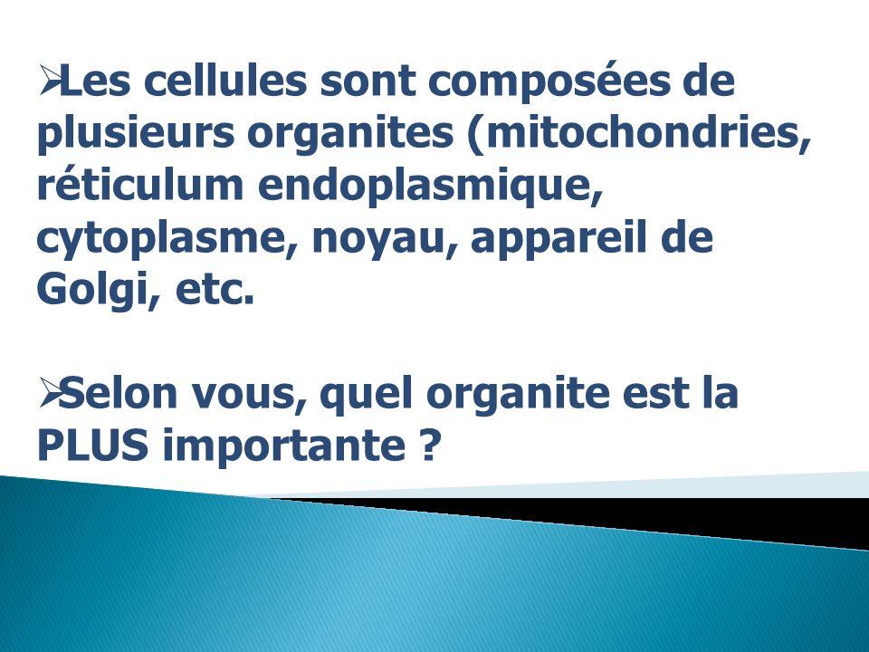 Les cellules sont composées de plusieurs organites (mitochondries, réticulum endoplasmique, cytoplasme, noyau, appareil de Golgi, etc.