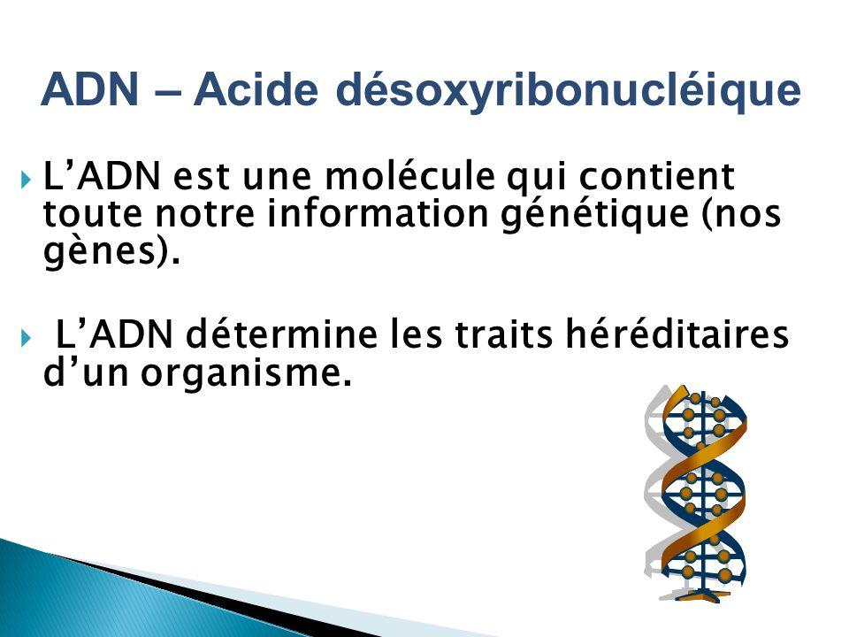 ADN – Acide désoxyribonucléique