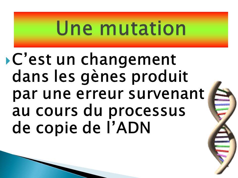 Une mutation C'est un changement dans les gènes produit par une erreur survenant au cours du processus de copie de l'ADN.