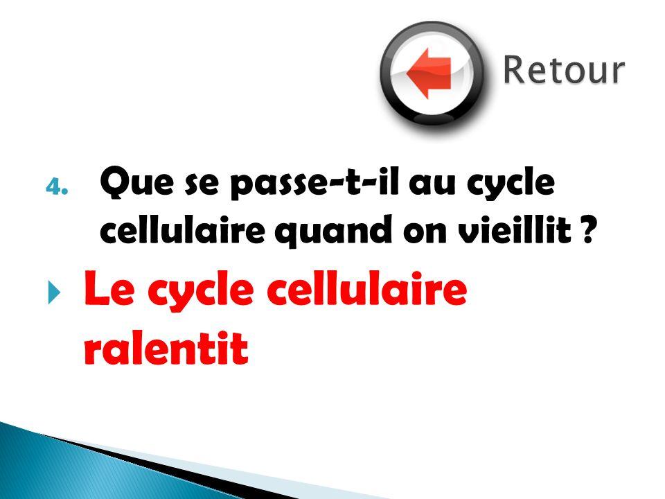 Le cycle cellulaire ralentit