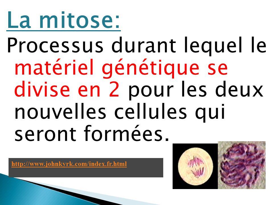 La mitose: Processus durant lequel le matériel génétique se divise en 2 pour les deux nouvelles cellules qui seront formées.