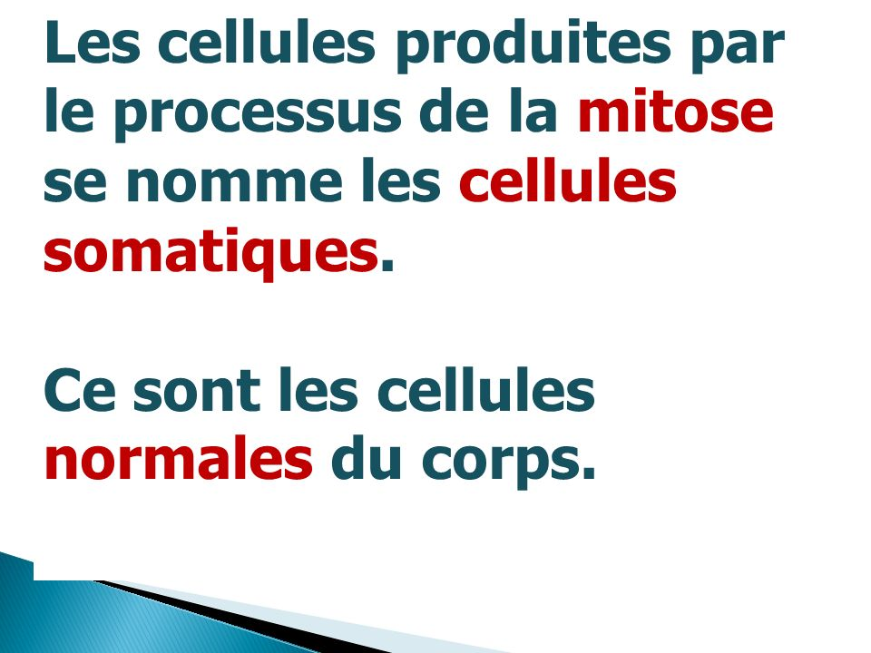 Les cellules produites par
