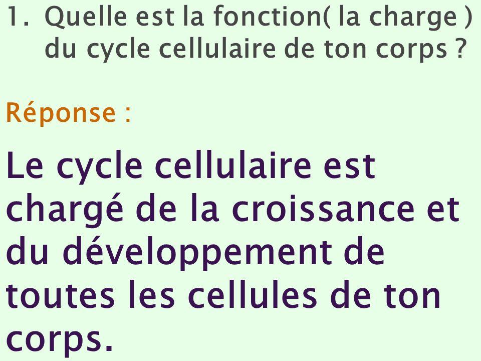 Quelle est la fonction( la charge ) du cycle cellulaire de ton corps