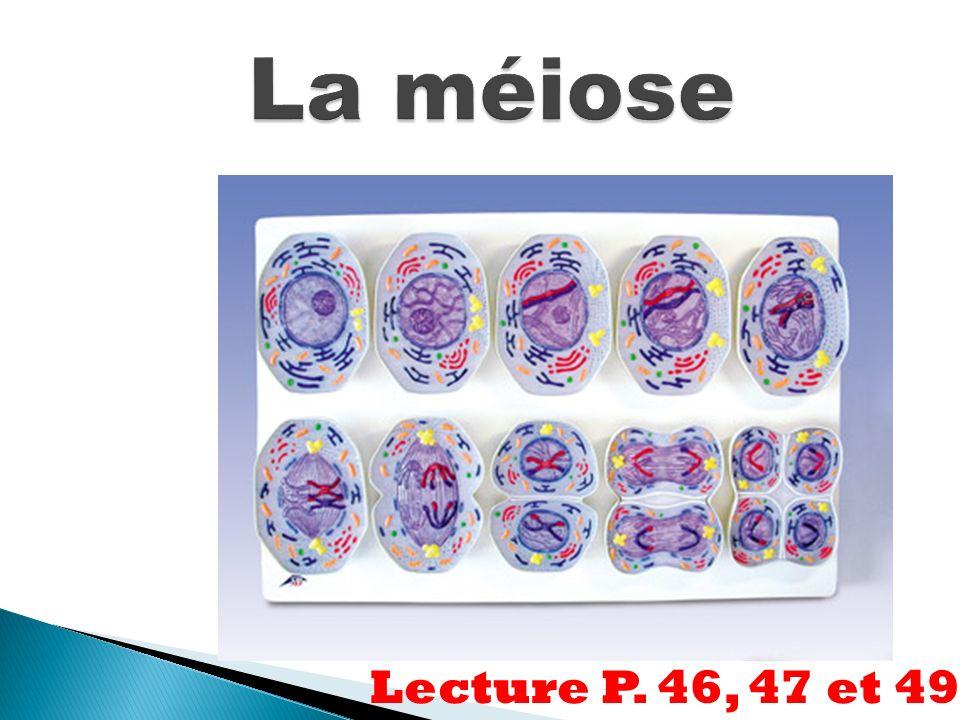 La méiose Lecture P. 46, 47 et 49