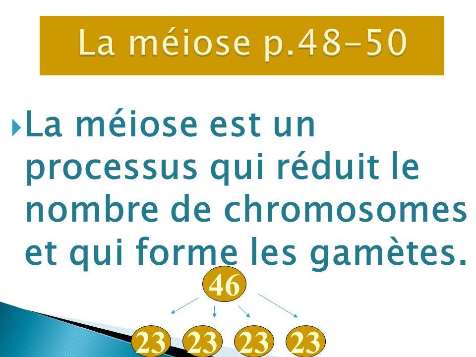 La méiose p.48-50 La méiose est un processus qui réduit le nombre de chromosomes et qui forme les gamètes.