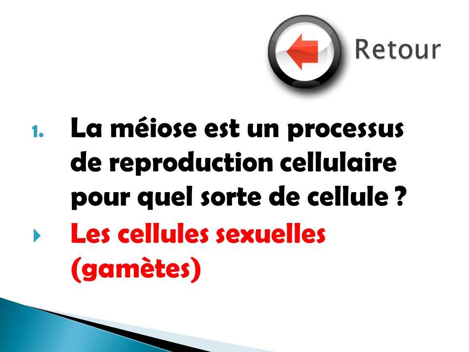 Les cellules sexuelles (gamètes)