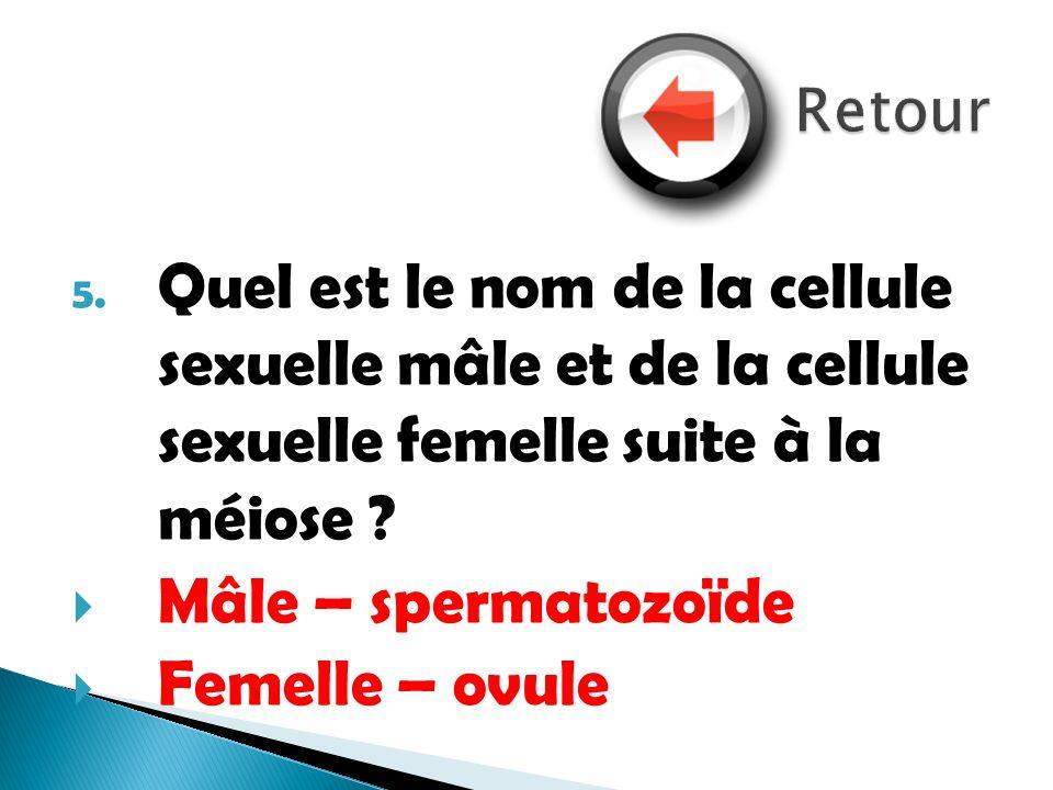 Retour Quel est le nom de la cellule sexuelle mâle et de la cellule sexuelle femelle suite à la méiose