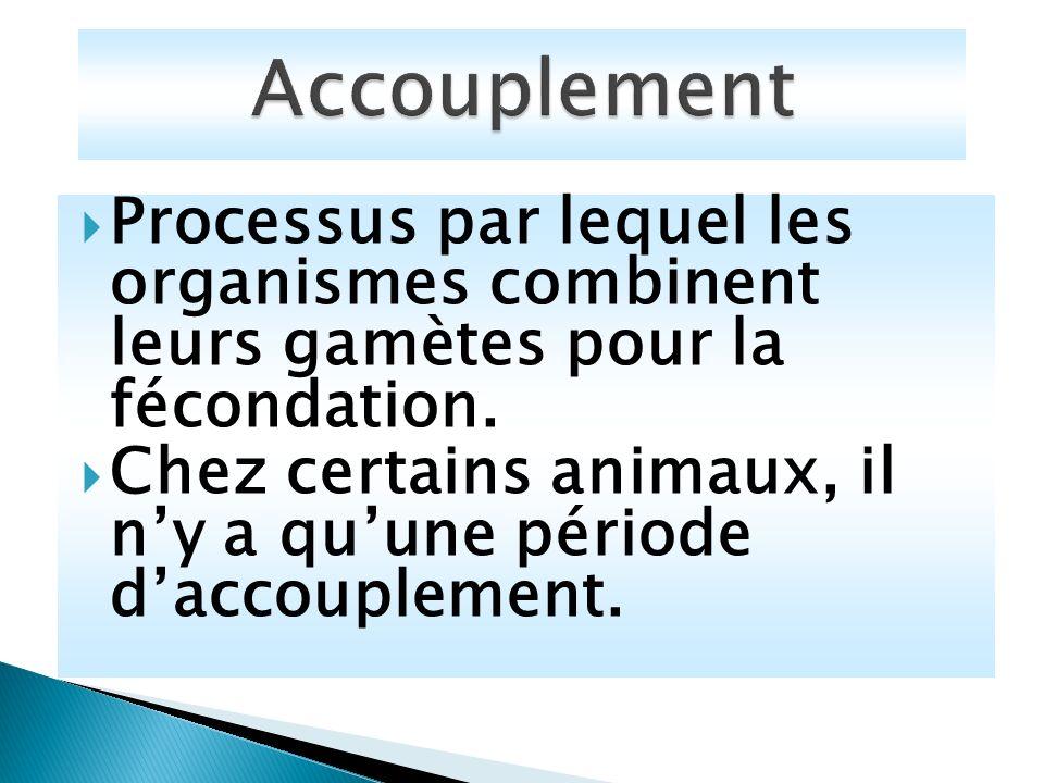 Accouplement Processus par lequel les organismes combinent leurs gamètes pour la fécondation.