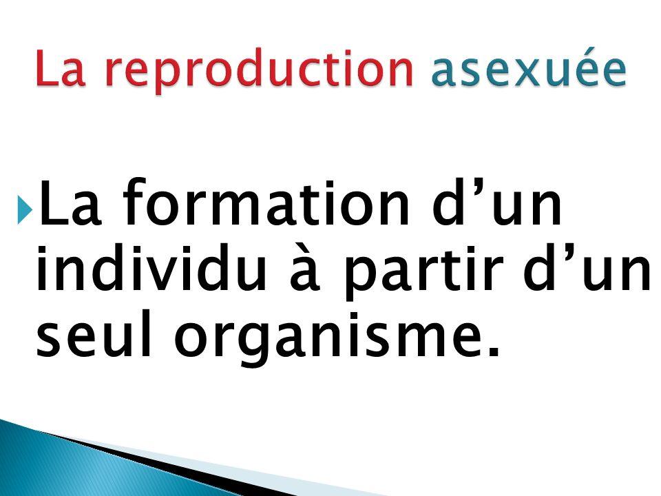 La formation d'un individu à partir d'un seul organisme.