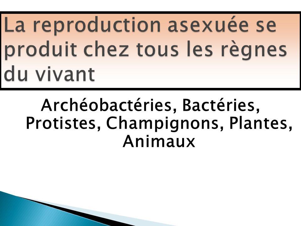 La reproduction asexuée se produit chez tous les règnes du vivant