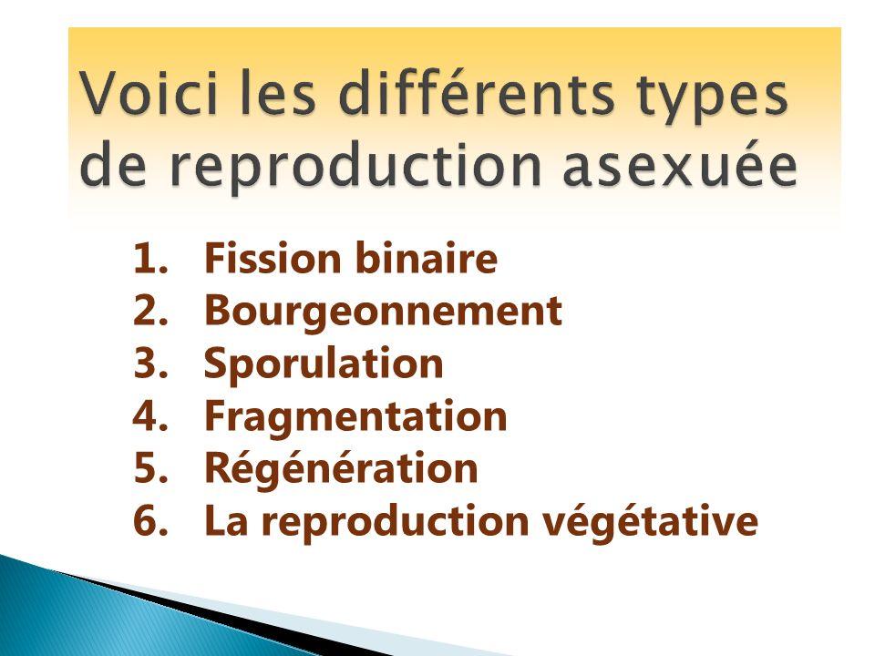 Voici les différents types de reproduction asexuée