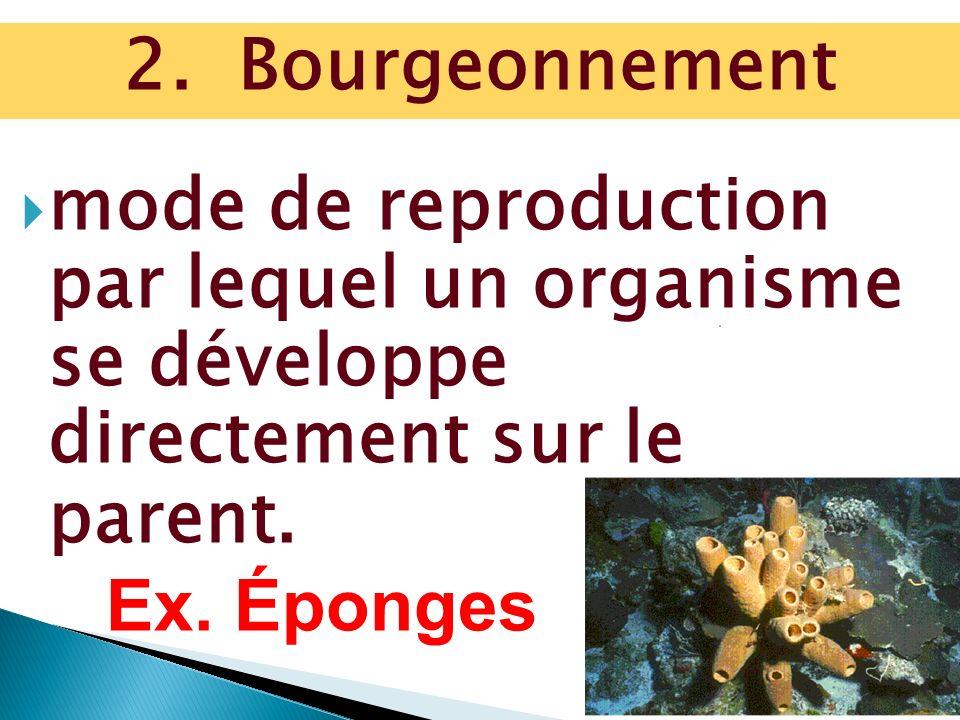 2. Bourgeonnement mode de reproduction par lequel un organisme se développe directement sur le parent.
