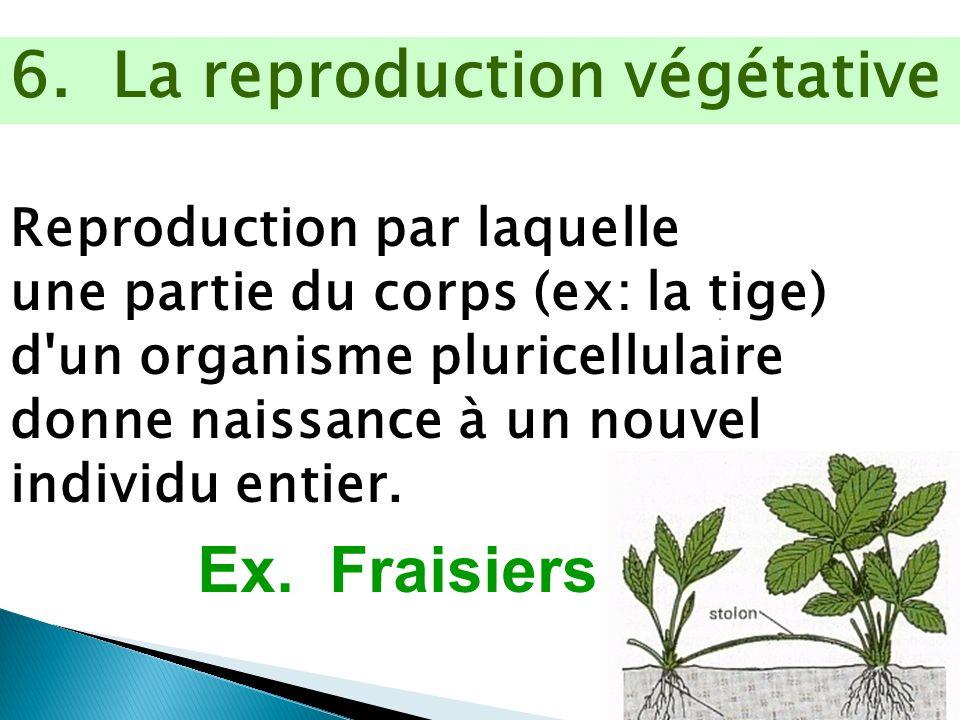 6. La reproduction végétative