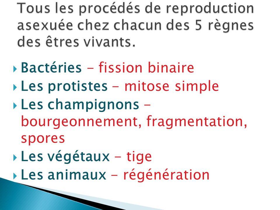Tous les procédés de reproduction asexuée chez chacun des 5 règnes des êtres vivants.