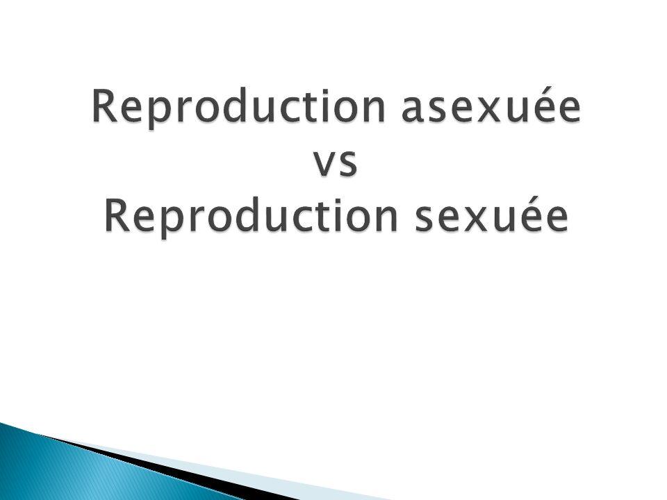 Reproduction asexuée vs Reproduction sexuée