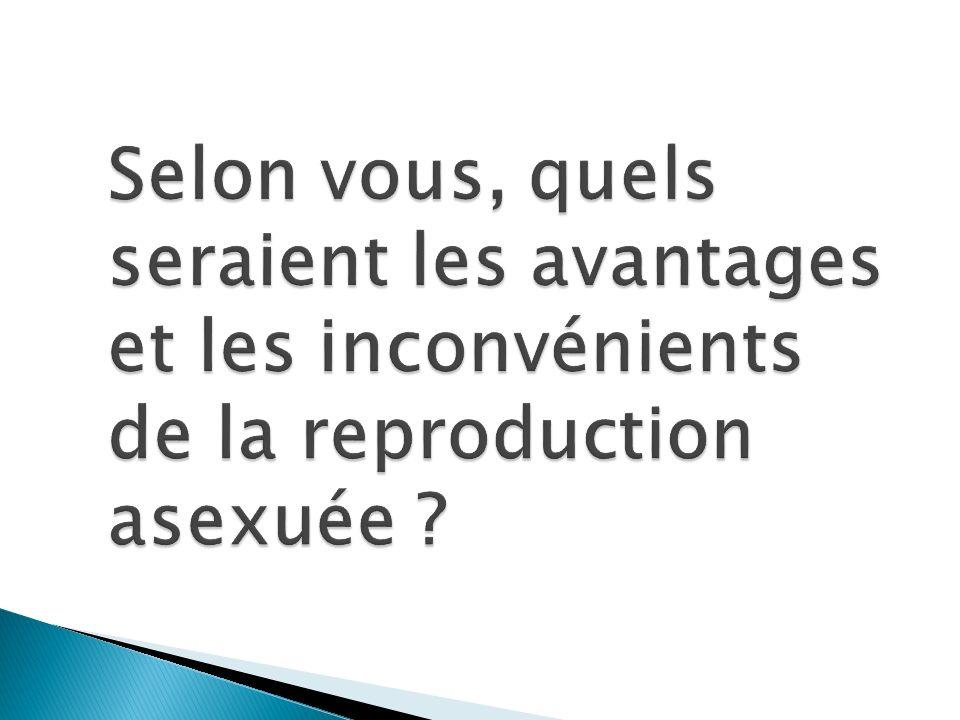 Selon vous, quels seraient les avantages et les inconvénients de la reproduction asexuée