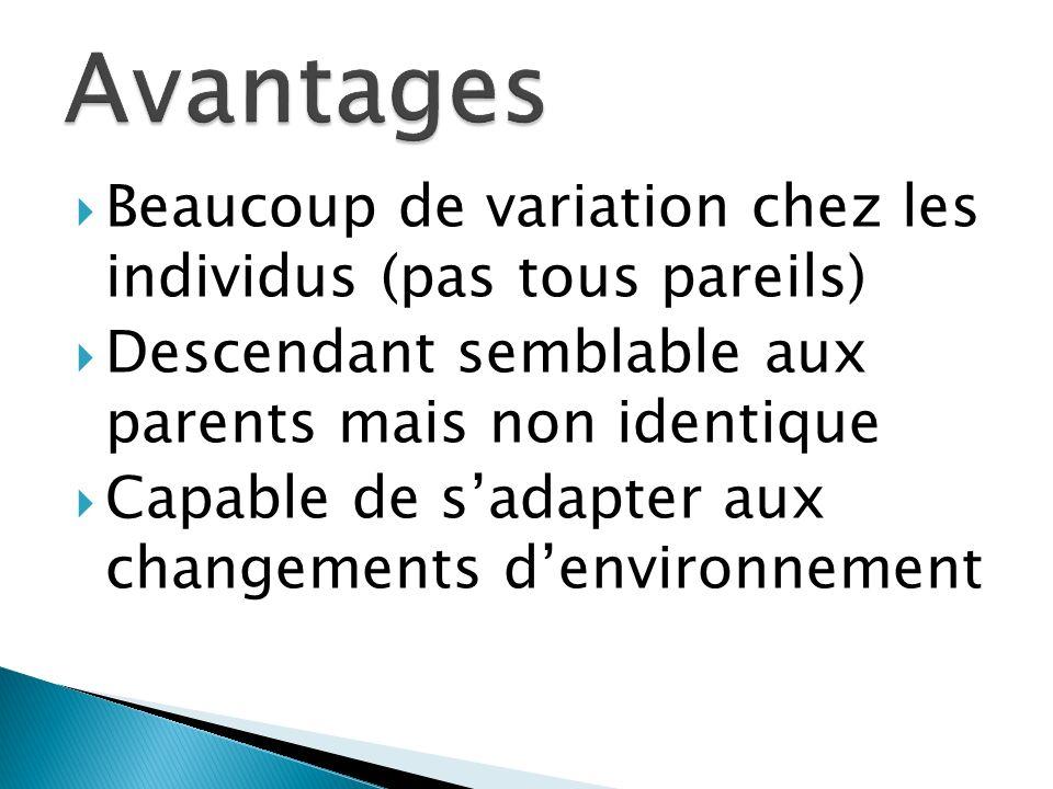 Avantages Beaucoup de variation chez les individus (pas tous pareils)
