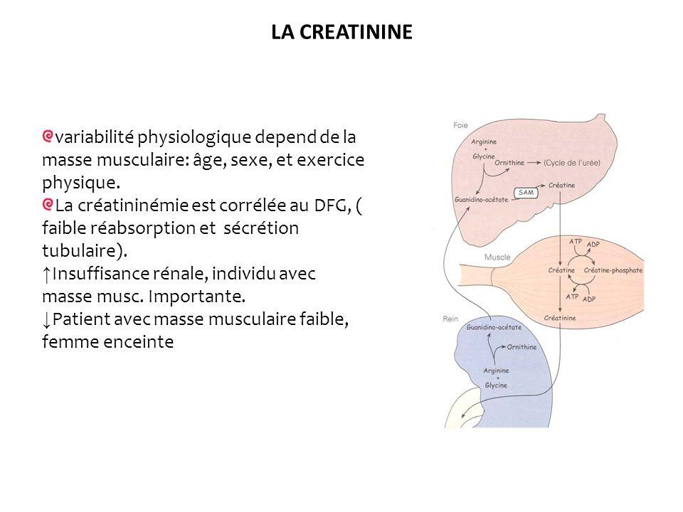 LA CREATININEvariabilité physiologique depend de la masse musculaire: âge, sexe, et exercice physique.