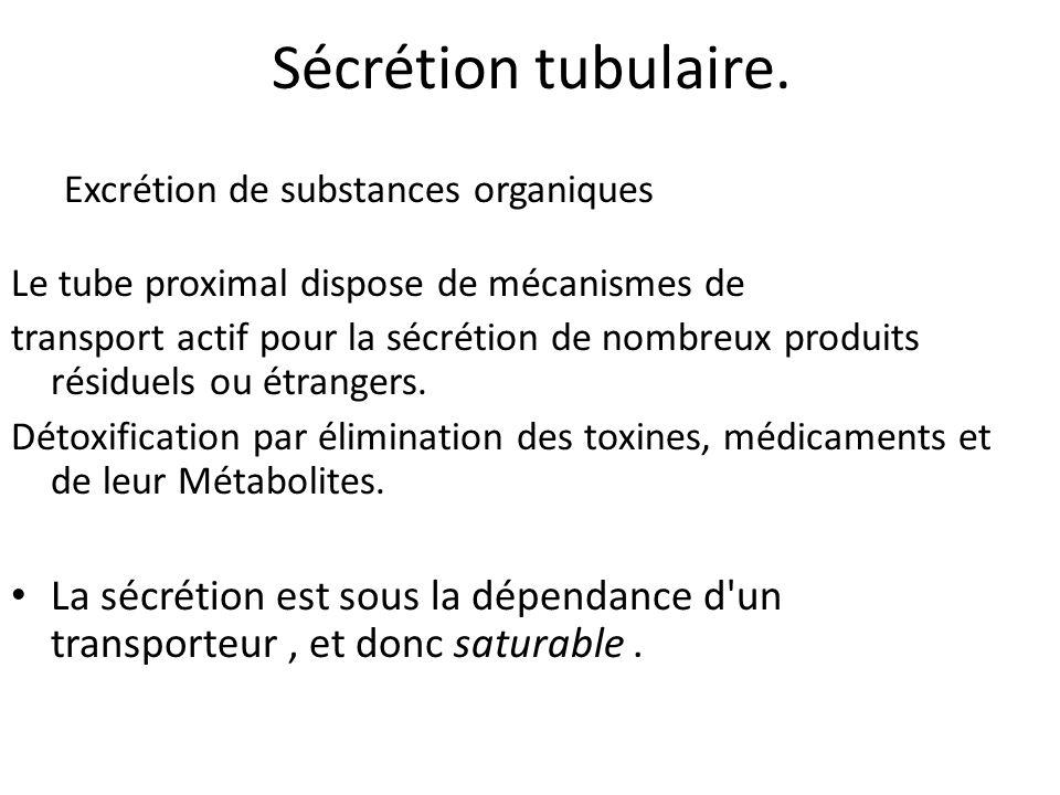 Sécrétion tubulaire.Excrétion de substances organiques. Le tube proximal dispose de mécanismes de.