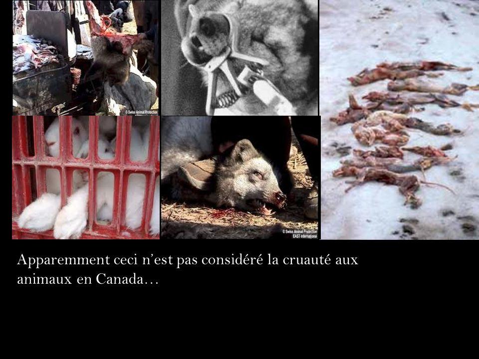 Apparemment ceci n'est pas considéré la cruauté aux animaux en Canada…