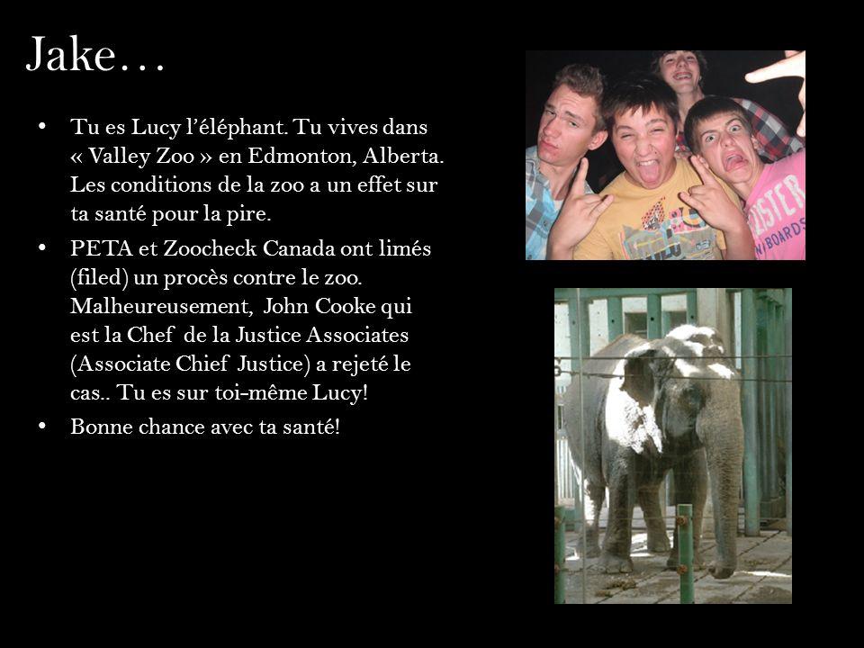 Jake… Tu es Lucy l'éléphant. Tu vives dans « Valley Zoo » en Edmonton, Alberta. Les conditions de la zoo a un effet sur ta santé pour la pire.