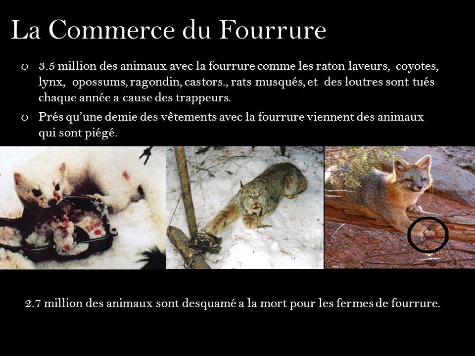 La Commerce du Fourrure