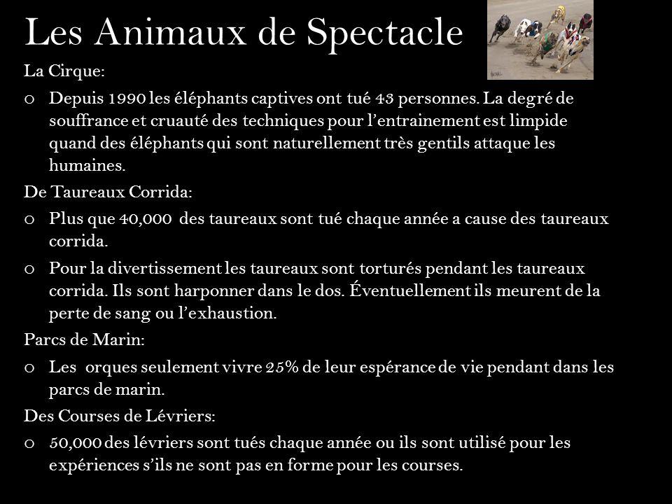 Les Animaux de Spectacle