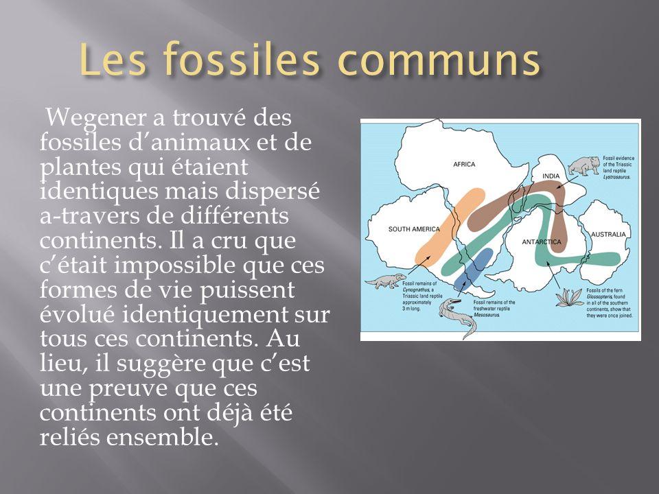 Les fossiles communs