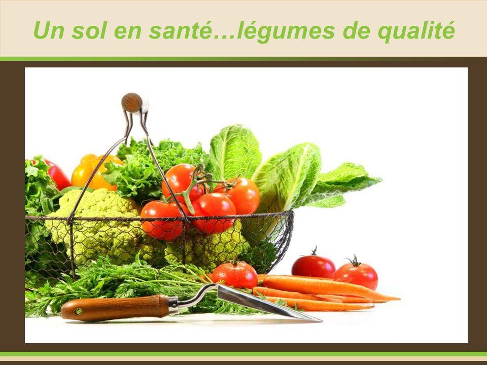 Un sol en santé…légumes de qualité