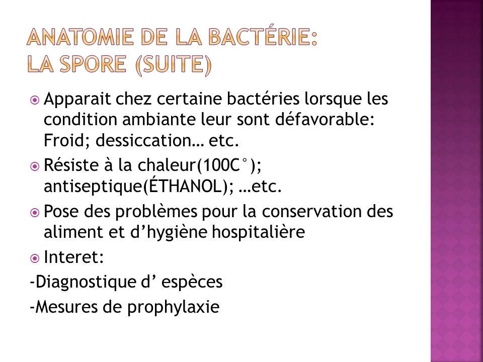Anatomie de la bactérie: La Spore (suite)