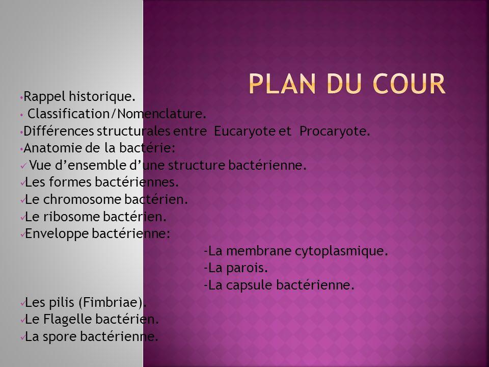Plan du cour Rappel historique. Classification/Nomenclature.
