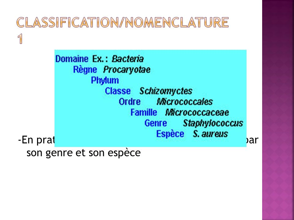 Classification/Nomenclature 1