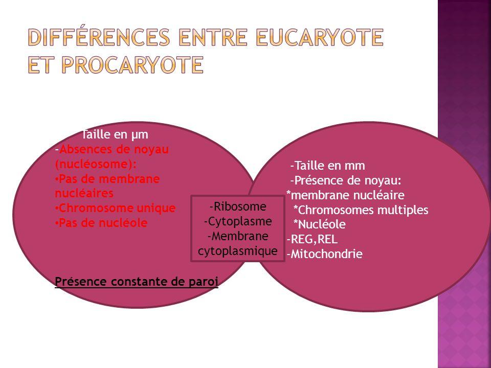 Différences entre eucaryote et procaryote