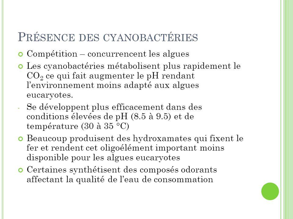 Présence des cyanobactéries