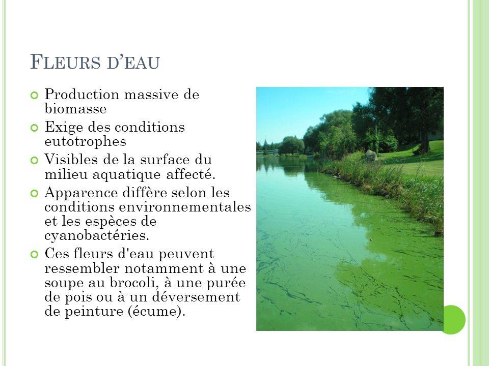 Fleurs d'eau Production massive de biomasse