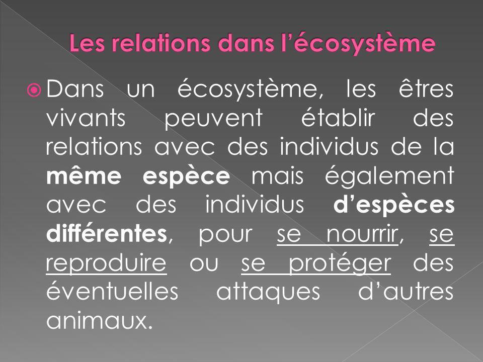 Les relations dans l'écosystème