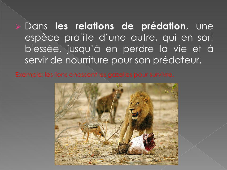 Dans les relations de prédation, une espèce profite d'une autre, qui en sort blessée, jusqu'à en perdre la vie et à servir de nourriture pour son prédateur.
