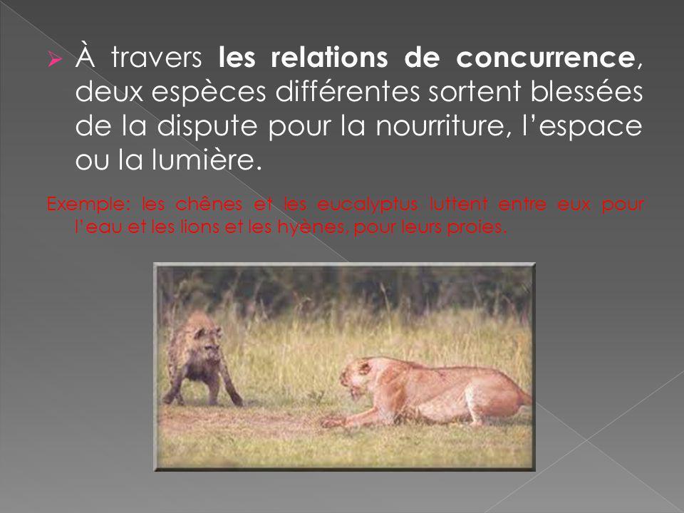 À travers les relations de concurrence, deux espèces différentes sortent blessées de la dispute pour la nourriture, l'espace ou la lumière.