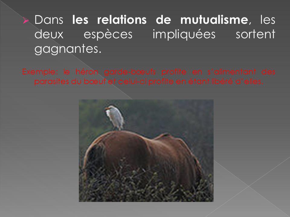 Dans les relations de mutualisme, les deux espèces impliquées sortent gagnantes.